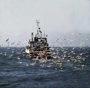 Pastoral del mar