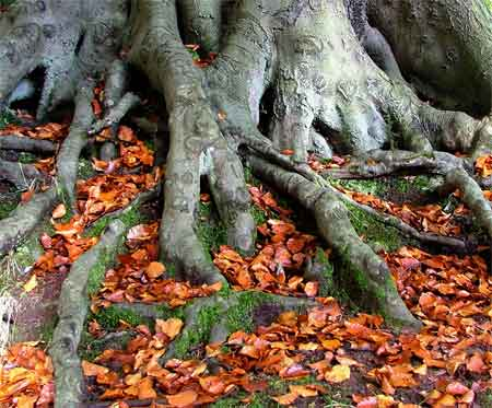 arbol-raices-otoño