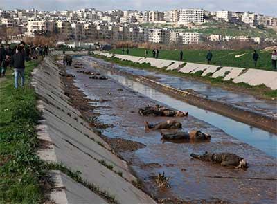 cadaveres-siria