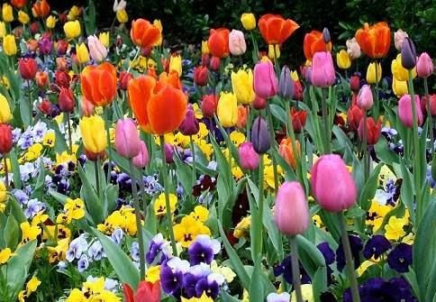 flores mayo