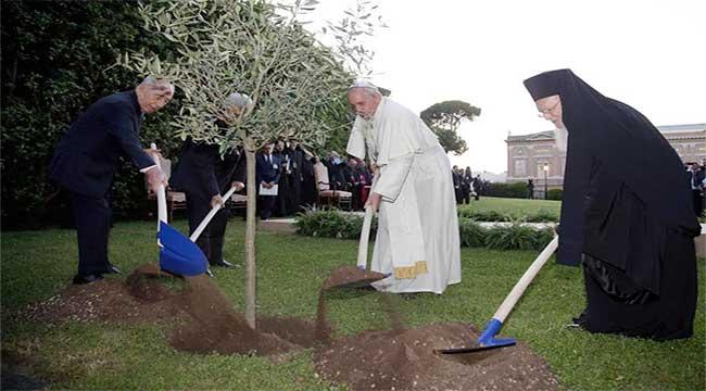 olivo-paz-papa-francisco