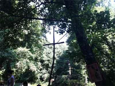 cruz-naturaleza