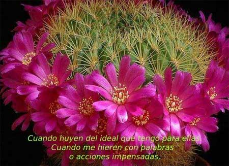 flor-espinas