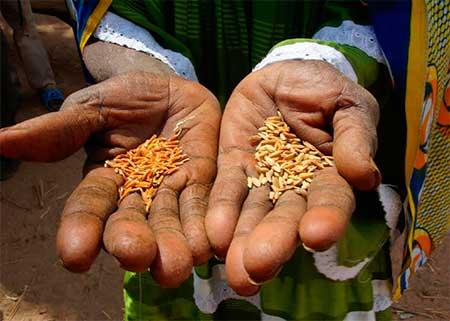 alimentos-manos-pobreza