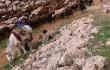 adviento-burro