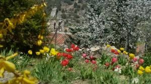 primavera-Buenafuente