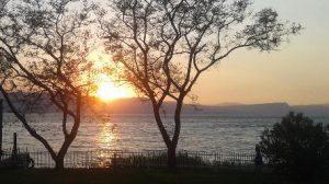 paisaje-arboles-agua