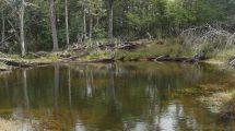 paisaje-naturaleza