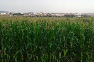 campos verdes-Extremadura